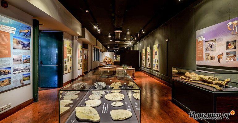 Сходить в музей естественной истории Крита