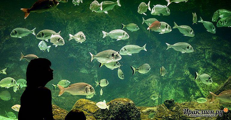 Куда съездить с ребёнком на Крите? В крупнейший греческий аквариум!