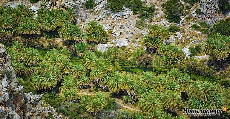 Поездка на пляж Превели: пальмовая роща на южном берегу острова Крит, Греция.
